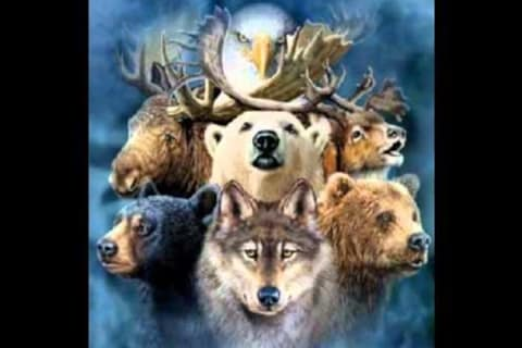 Find Your Animal Spirit Totem